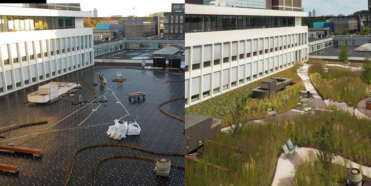Met groen gebouwen energieneutraal, klimaatrobuust en natuurinclusief maken