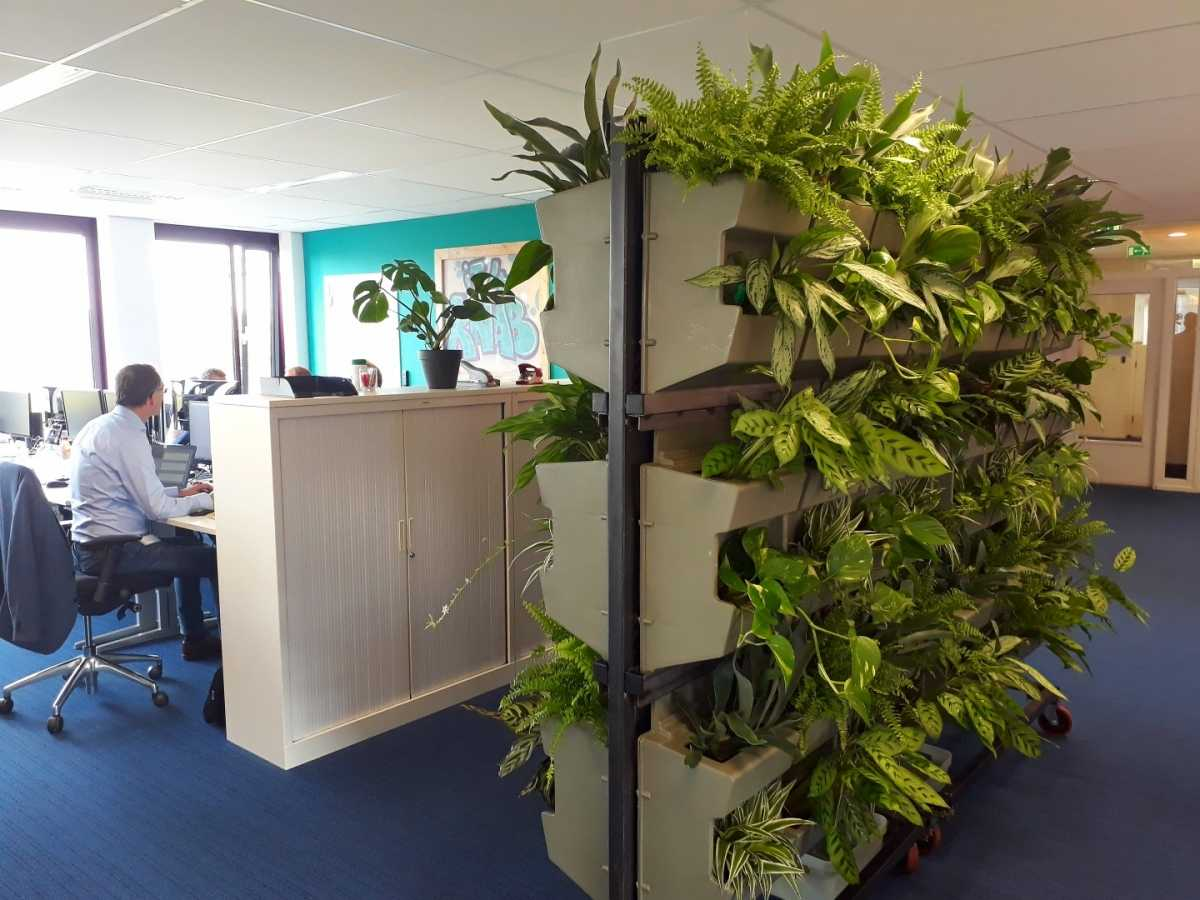 Planten Op Kantoor : Wilde wand brengt luchtzuiverende planten in kantoren smart